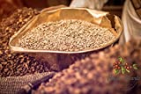 Haraaz Green Coffee AA | Premium-Rohkaffee 100% Arabica...